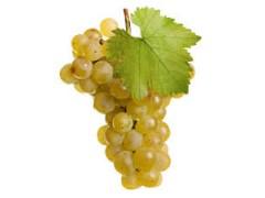 500 g de raisin  blanc ( Chasselas ou Danlas)