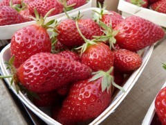 fraises petite barquette