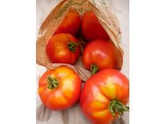 Tomate Classique paola